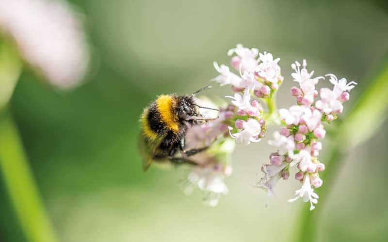 Vom Garten zum Insektenparadies